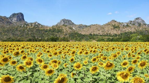 Wisata Instagramable Di Malang Yang Banyak Bunga Cantiknya
